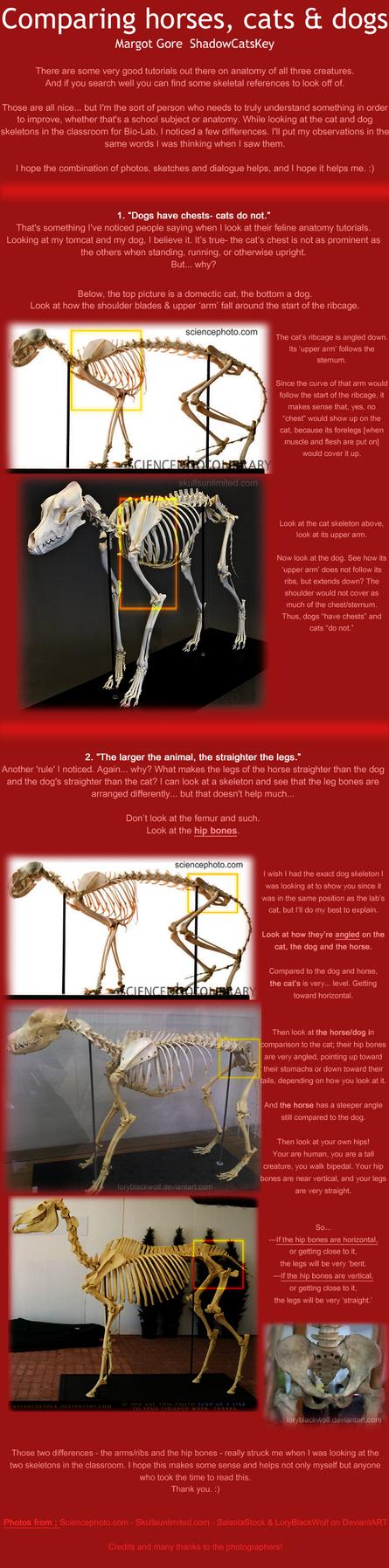 Cat vs Horse vs Dog anatomy by ShadowCatsKey