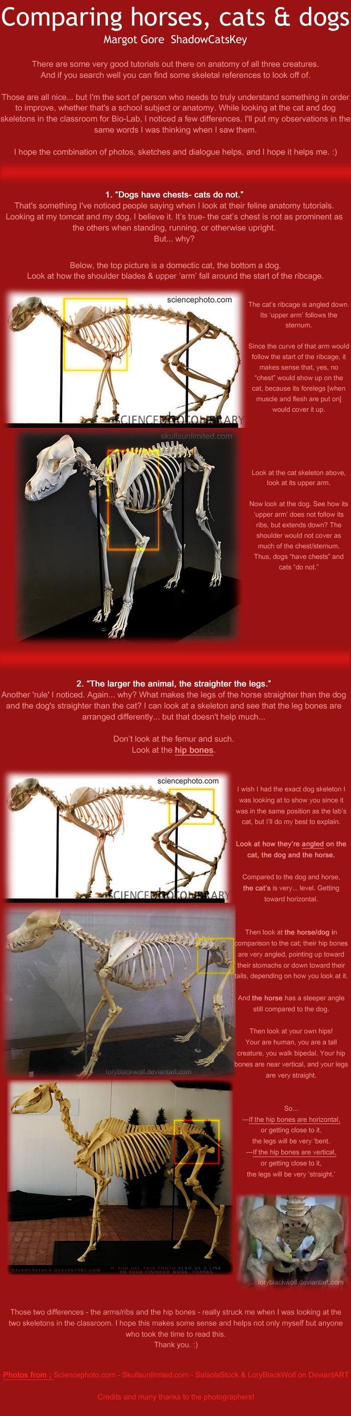 Cat Vs Horse Vs Dog Anatomy By Shadowcatskey On Deviantart