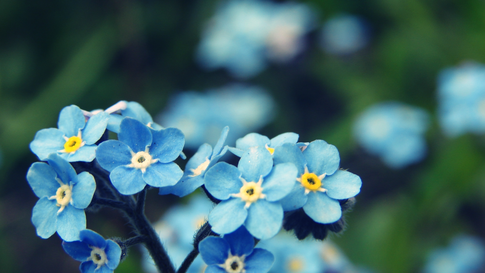 Blue blue blue flowers by turbonisia on DeviantArt