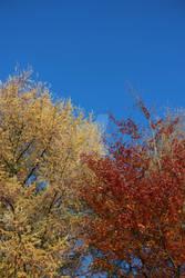 Is Autumn Here Again?
