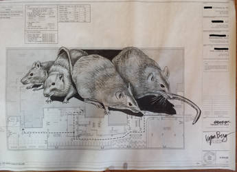 Rats Plan (Changed Plans)