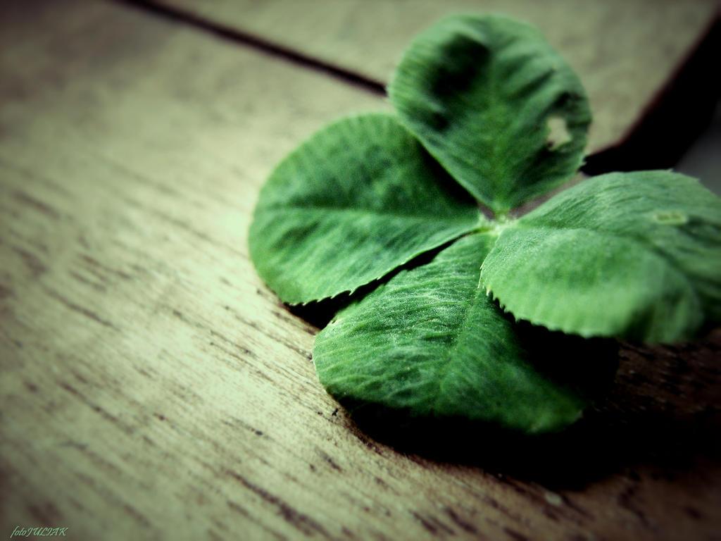 Four-leaf clover by fotoJULIAK