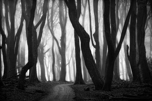 Forest of dancing trees