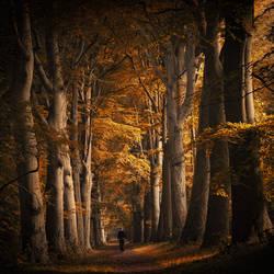 Autumn walk by Northstar76