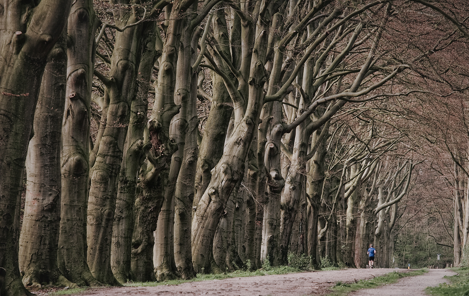 Spectators by Northstar76
