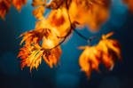 Fall On Fire by Northstar76