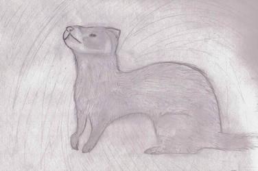 Realistic ferret commission ex