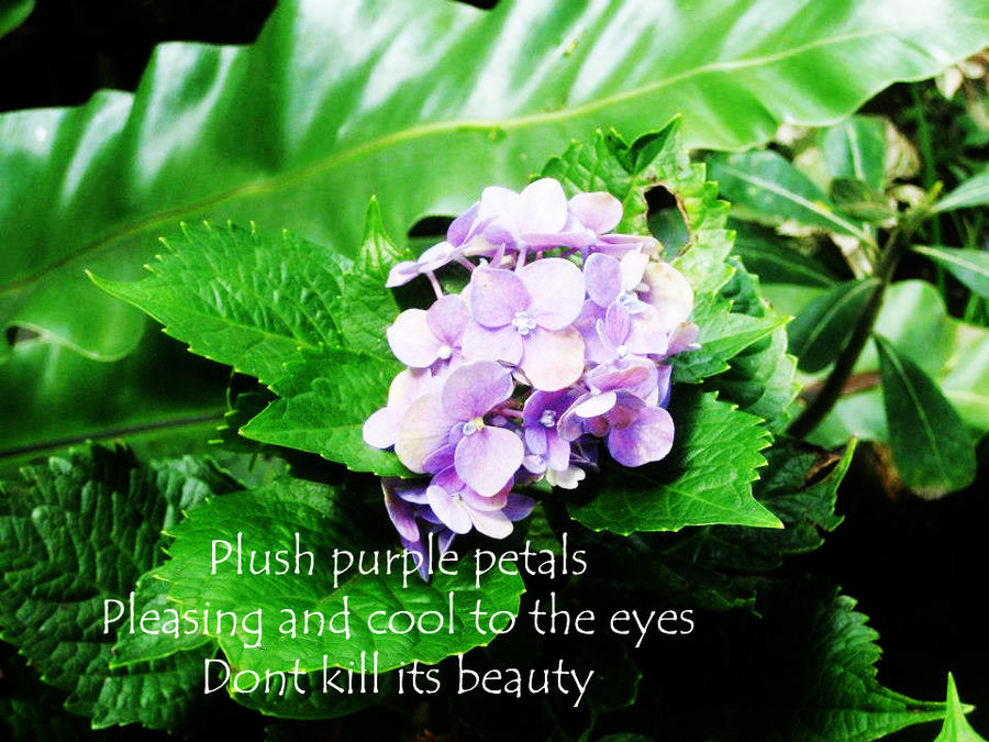 haiku poems about flowers - photo #30