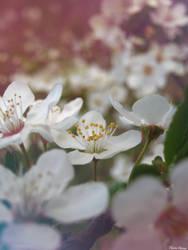 Spring time by FlorinHasna