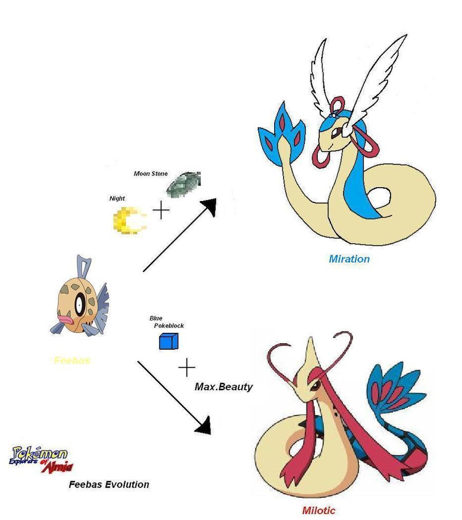 Ledyba Evolution Chart Aksuyq Eyeco