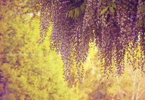 Lavender Falls by icynova96