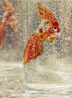 Fishy Dreams by icynova96