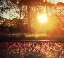 I'll Dream Here by icynova96