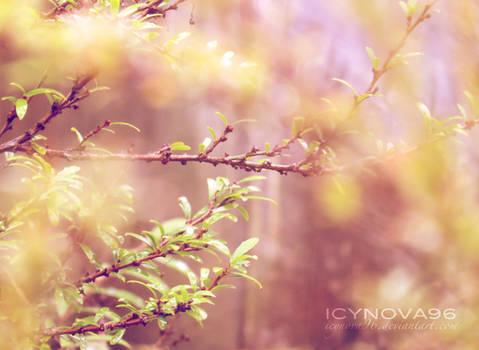 Fairy Lens