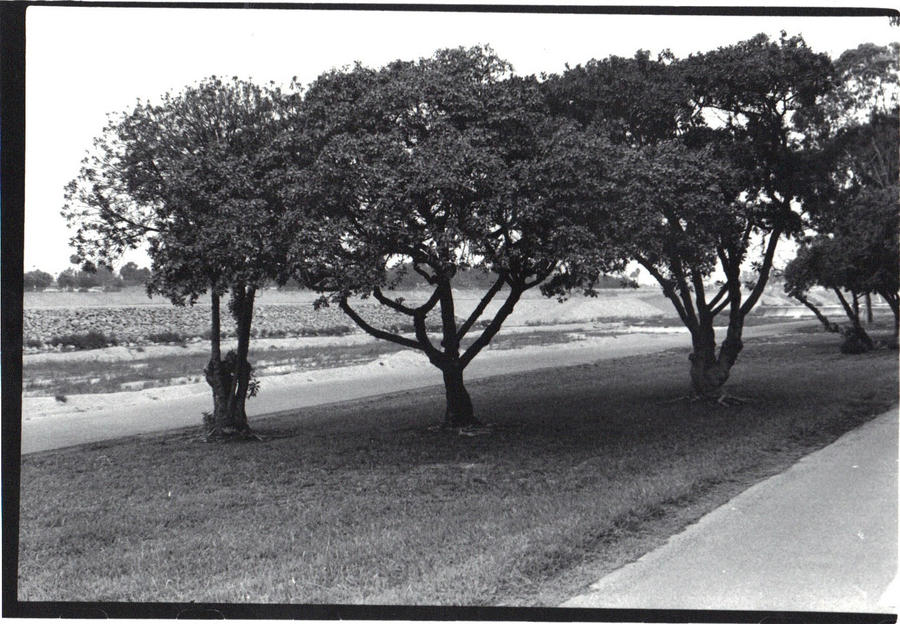 Trees by QueenieNirvana