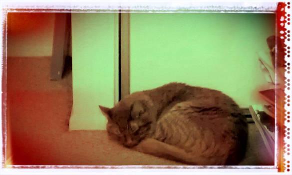 El Gato Esta Durmiendo
