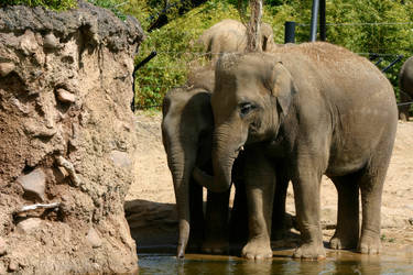 Elephants 3 by amerindub