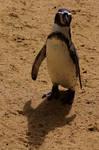 Penguin by amerindub