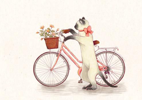Cycling granny