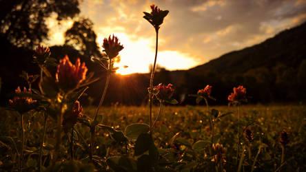 Clover in the Sunrise (Ticino, Switzerland) by RedstoneArmy