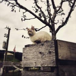 Cat #2 by RedstoneArmy