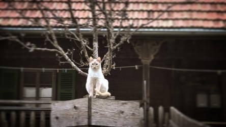 Cat #1 by RedstoneArmy