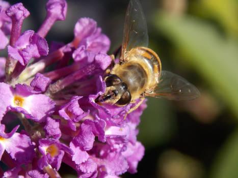 Bee'autiful