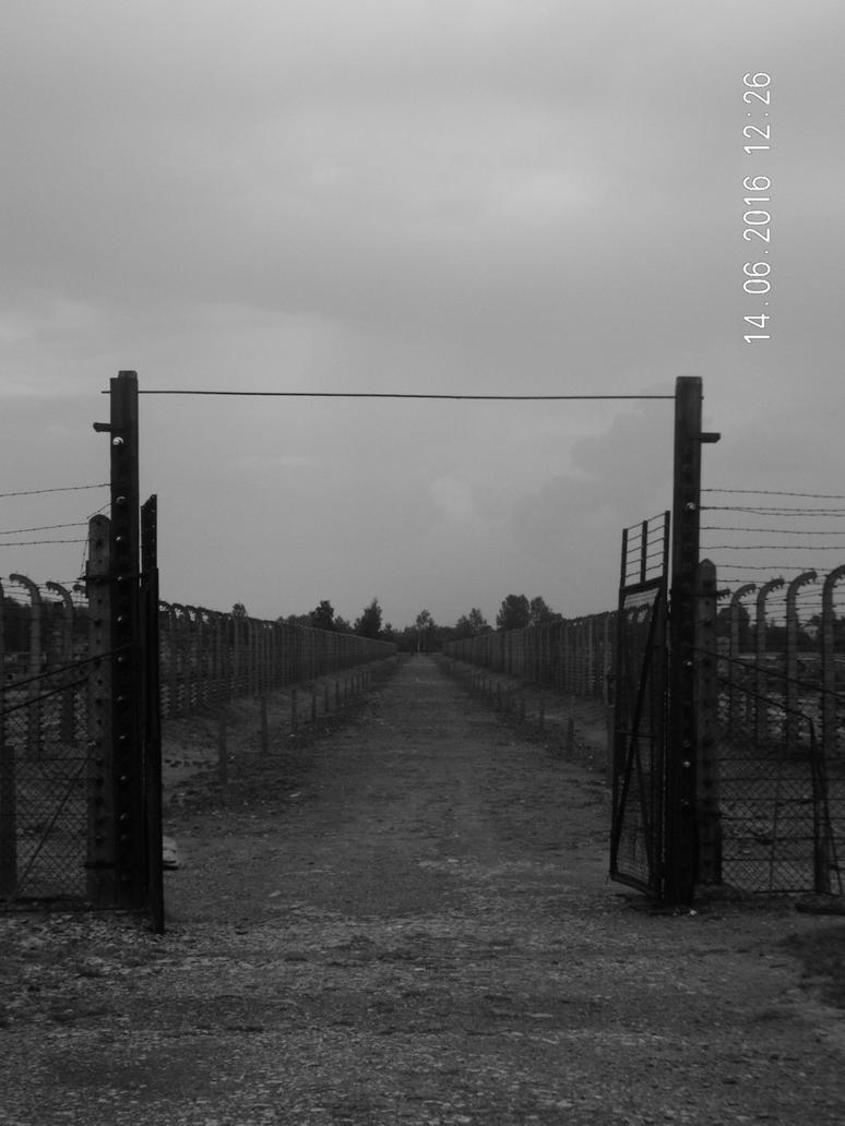 Long Walk by cynotureman