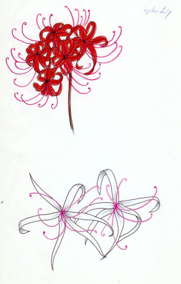 Two Spider Lilies, Red-White by koshii on DeviantArt