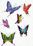 Butterfly- colors 3