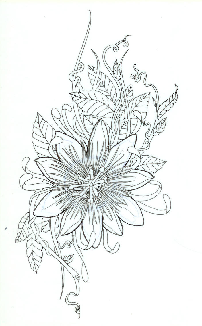 Passion Flower Line Drawing : Passiflora lines by koshii on deviantart