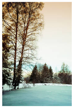 Schlipak forest