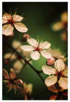 Spring by leonard-ART