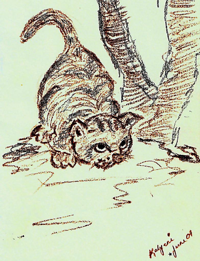 Cat12 by kalyanirajalingham
