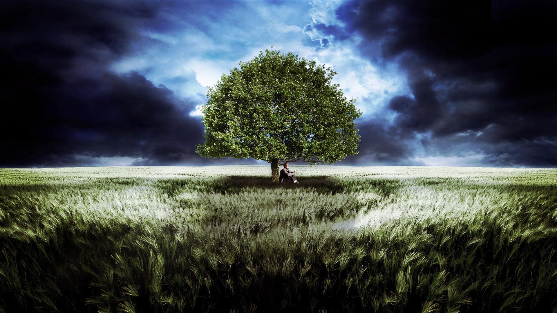 a thousand words tree