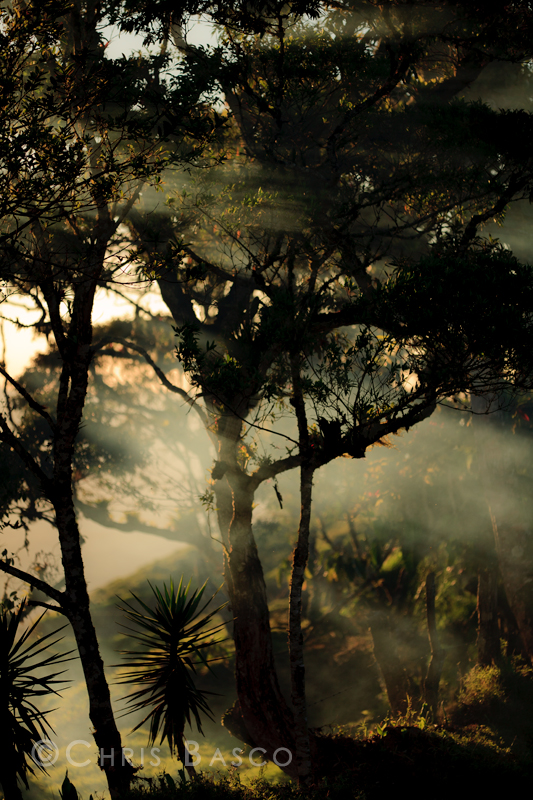 Trees IV by CBasco