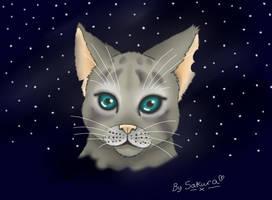 Warrior Cats by sakura11