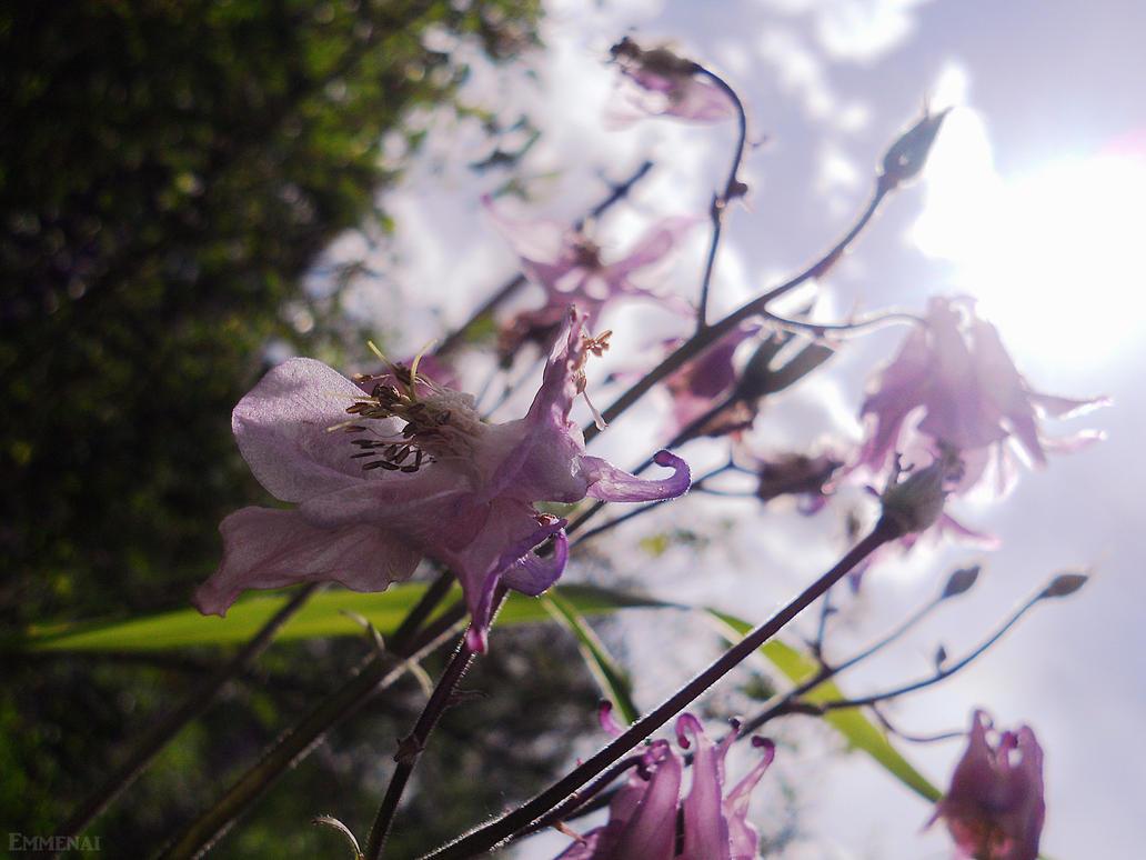 Waltz of the Flowers by Emmenai on DeviantArt