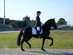 Stallion Parade V