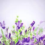blumen, lila. by gloeckchen