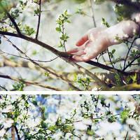 springtimes. by gloeckchen