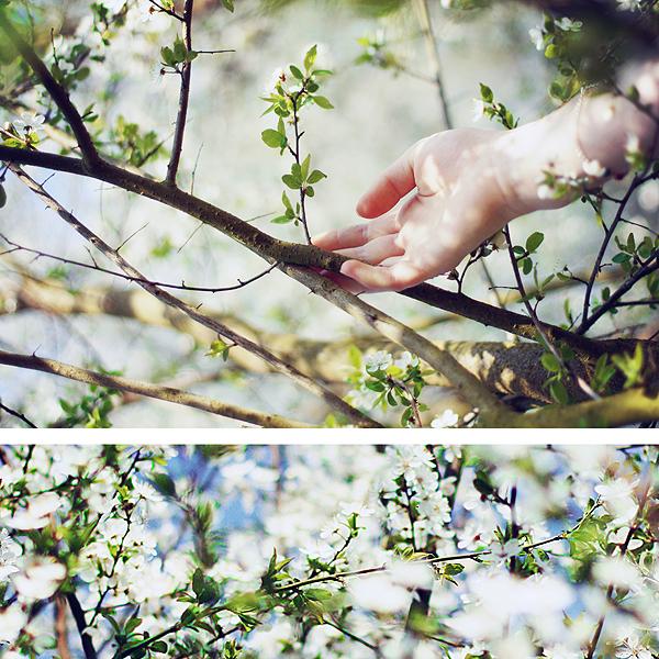 springtimes.