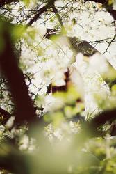 IDtree. by gloeckchen