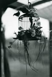 The cage. by gloeckchen