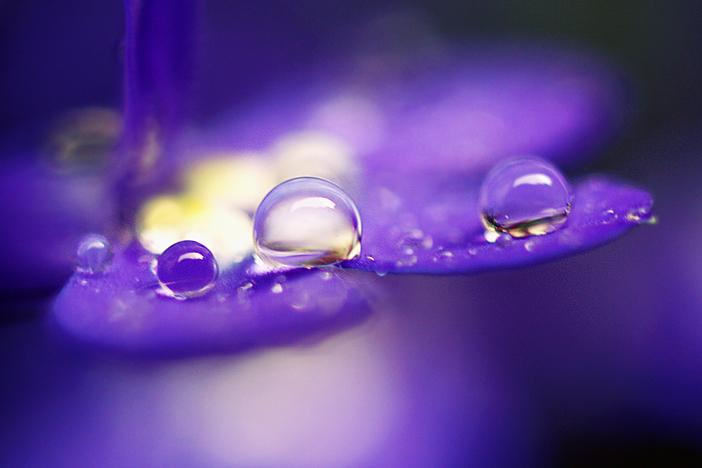 drops in purple. by gloeckchen