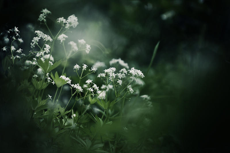 the flowers - wallpaper. by gloeckchen