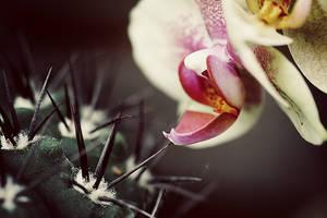 One touch. by gloeckchen