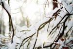 snow, light II - wallpaper