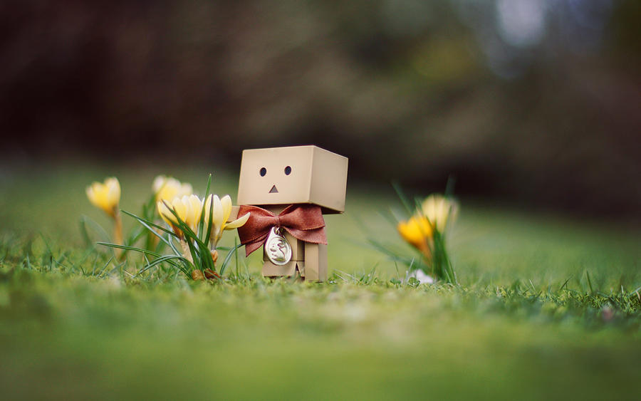 danbo march wallpaper by gloeckchen on deviantart