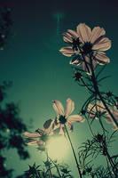 A sense of  s u m m e r  days by gloeckchen